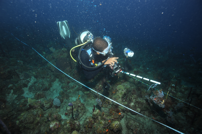 Scientific diver takes a phototransect.