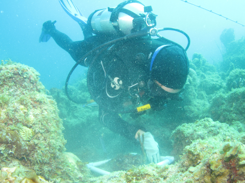 Scientific diver taking a quadrat.