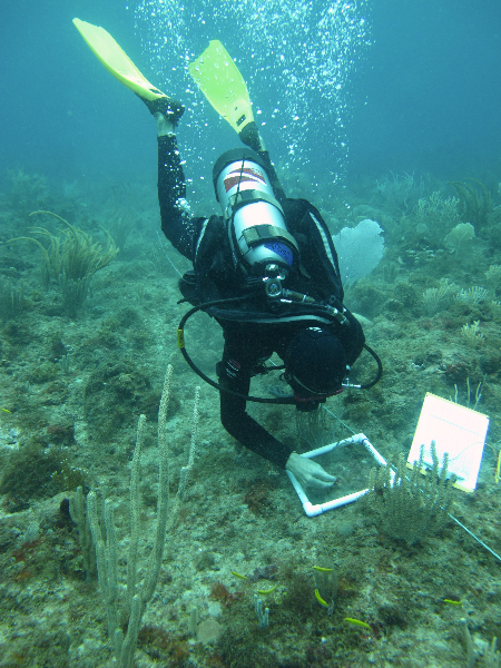 Scientific diver working on a quadrat.