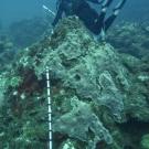 Scientific diver conducting a survey.