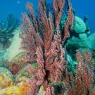 Colorful Sea Rod