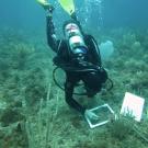 Scientific diver working on a quadrat.