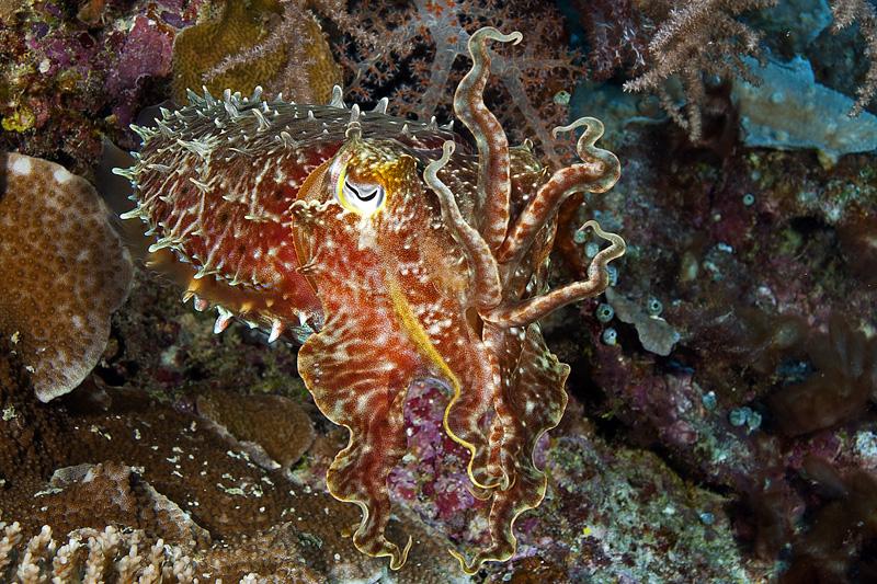 Coolest. Octopus. Ever. © Ken Marks/LOF