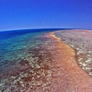 Portrait of the Great Barrier Reef taken from a drone surveying the reef - © William Robbins/ LOF