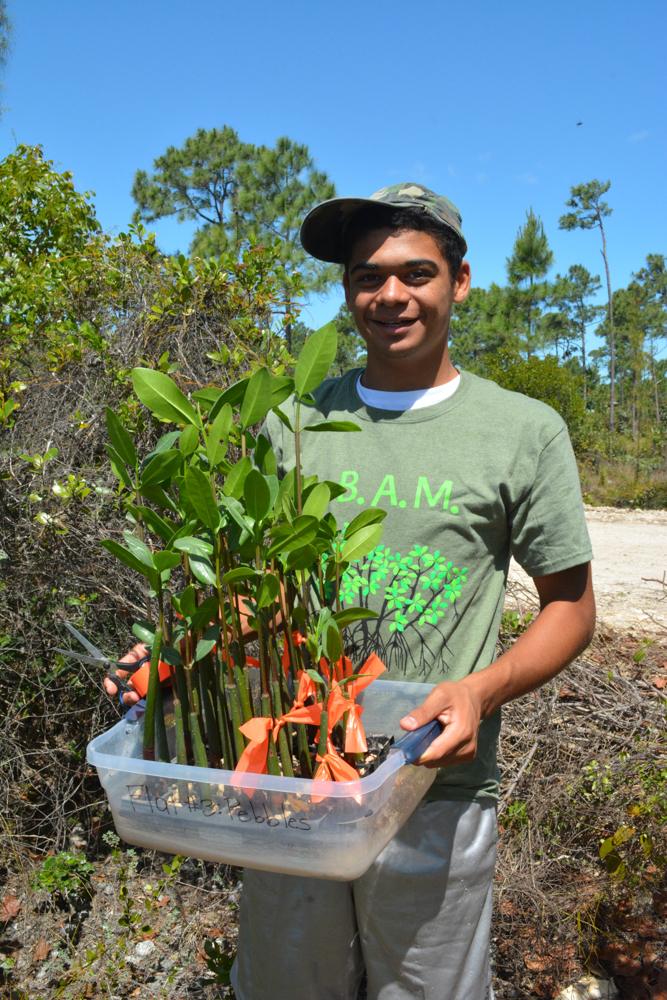 FRIENDS of the Environment intern, Christian McIntosh helps to tag each of the mangrove propagules with orange so that we can monitor their growth and health.