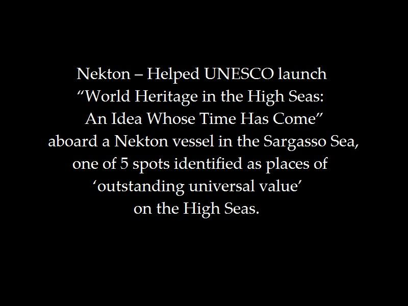 nekton-group