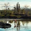 A flamingo feeding in the shallows. (© Daniel Correia/UNESCO)