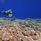 Scientific survey being conducted in Tonga.