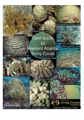 Field Guide to Western Atlantic Stony Corals