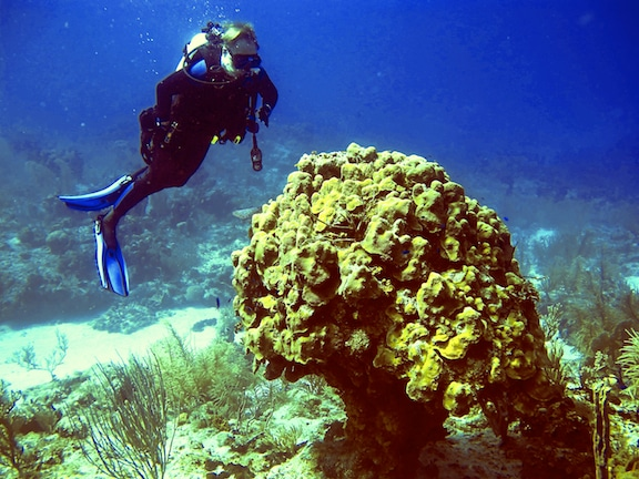 Dr. Matti Kiupel during a research dive on this leg of the Global Reef Expedition in Great Inagua, Bahamas