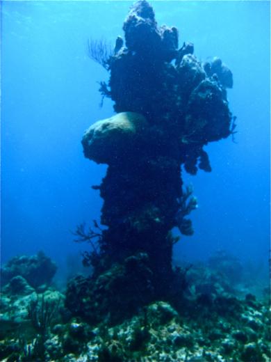 Bajo Nuevo's corals: Coral pillar.