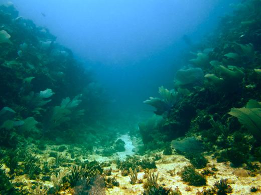 """One of Serranilla's coral """"gulches"""""""
