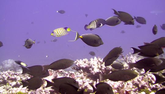 Herbivores scan the reef.