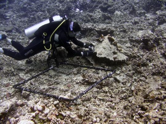 Dr. Bejarano sets up underwater cameras to monitor herbivore activity.