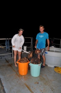 Alex Dempsey and Dr. Andrew Bruckner collected 229 COTS in just two dives.