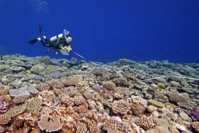 KSLOF diver conducting coral reef survey