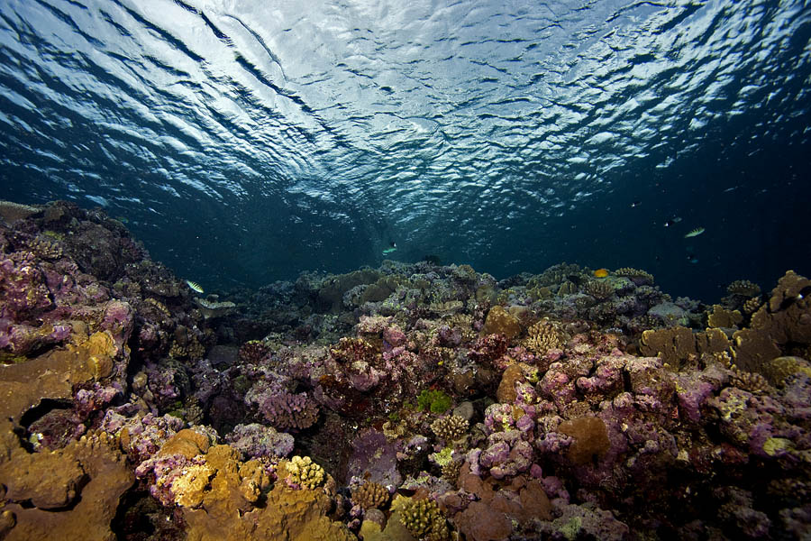 Biodiscovery and the Great Barrier Reef