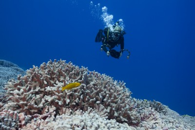 Coral Surveys, Benthic Surveys, and Fish Surveys