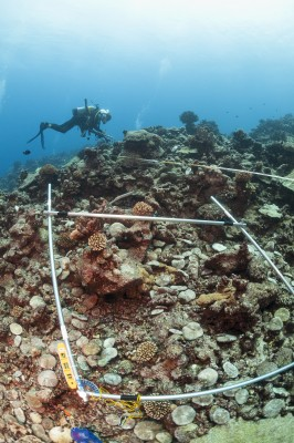 Monitoring resilience factors like crown of thorns star fish, coral bleaching, and ocean pollution