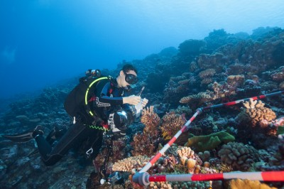 Measuring Coral Reef Resilience