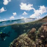 A New Model of Coral Reef Health