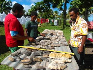 Fisheries Officer, William Saladrau, measuring sea cucumbers during survey.