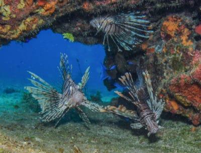 Divers Also Observe Altered Fish Behavior in Jamaican Nurse Sharks