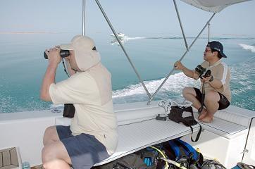 dugong team1