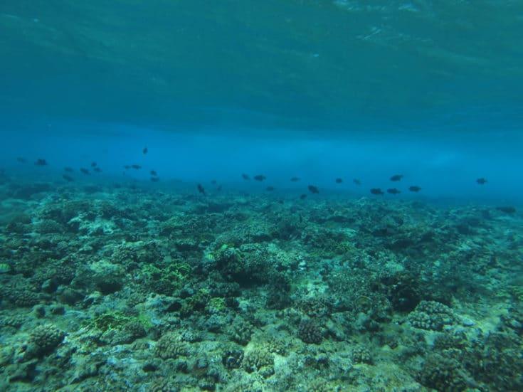 Green Snails Underwater