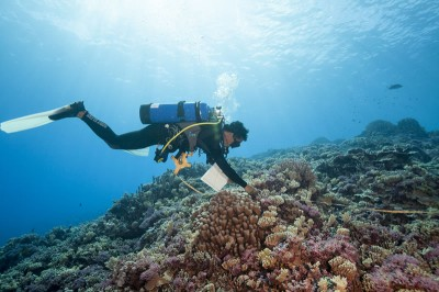 Science Diver Surveys French Polynesia Reef