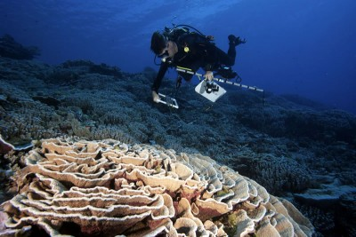Diver surveys Great Barrier Reef