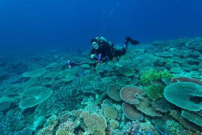 Capt Phil Renaud taking underwater photographs.