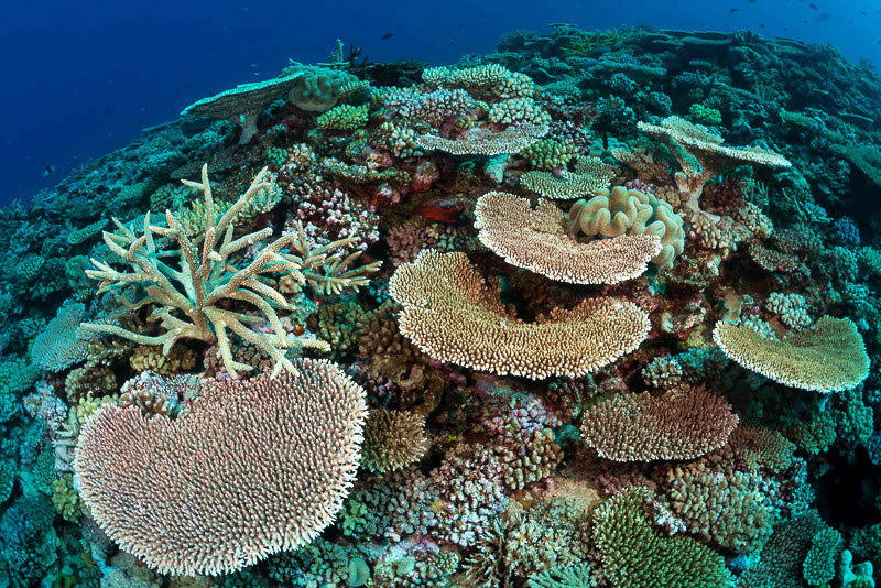 largest coral reef research - 800×534
