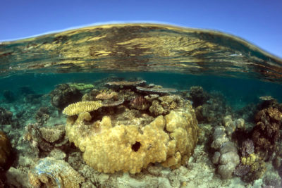 Shallow corals.