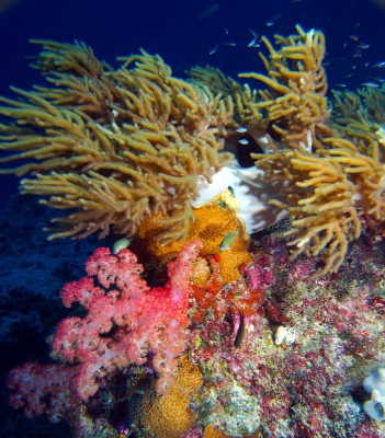 Swimming Among Soft Corals Of The Great Barrier Reef