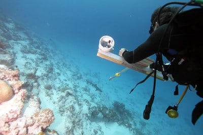 Scientific diver using stereocam to video shark.
