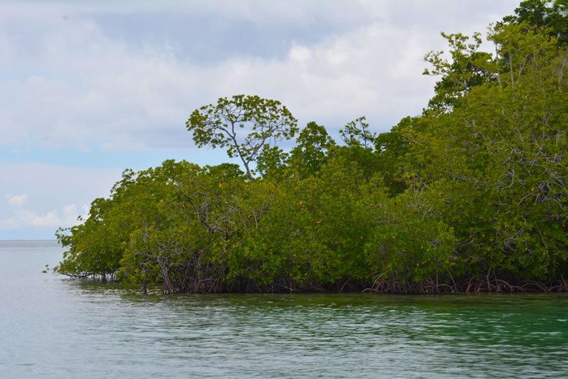 solomon islands  the pacific melting pot  kslof living