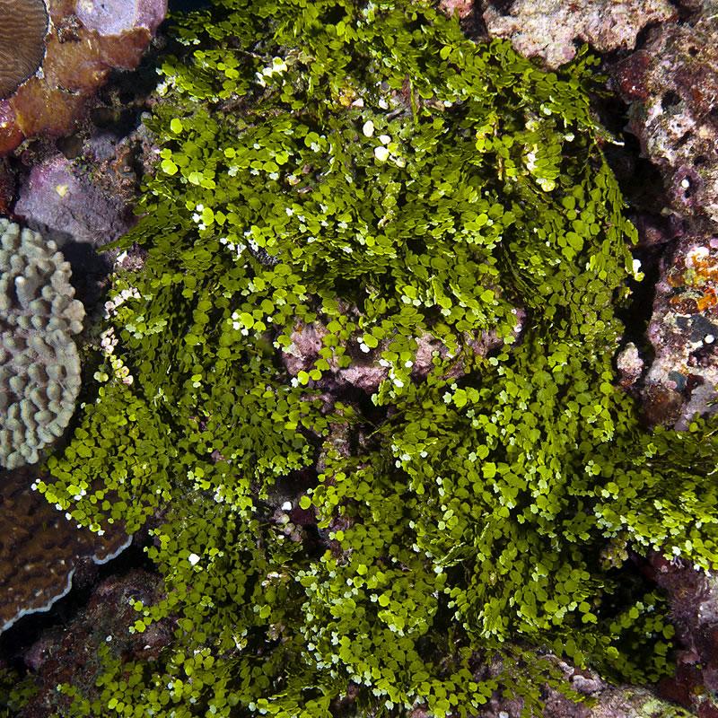 Sustainable Seaweed Farming in Solomon Islands (KSLOF)Living Oceans
