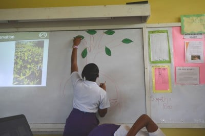 Students listed the benefits and threats on mangrove leaves after the seminar.
