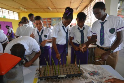 Students planting their propagules in sand.