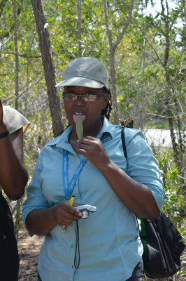 Fulvia Nugent participating in the mangrove walk with her students.