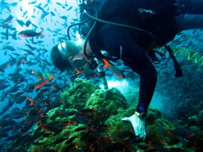 research diver collects a coral sample near Darwin Island Galapagos