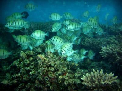 BIOT coral reef