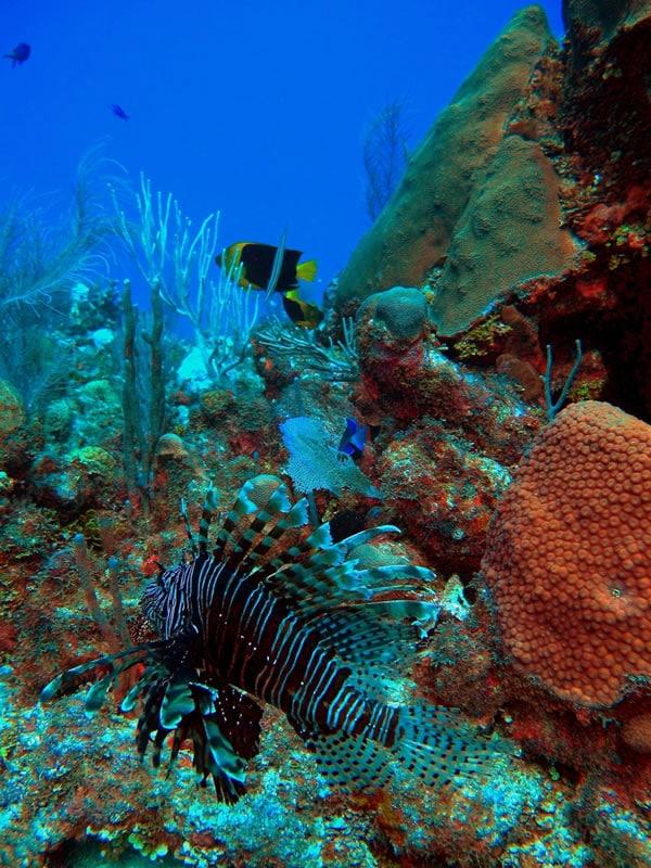 Restoring jamaica s pedro banks kslof living oceans for Reef fish for sale