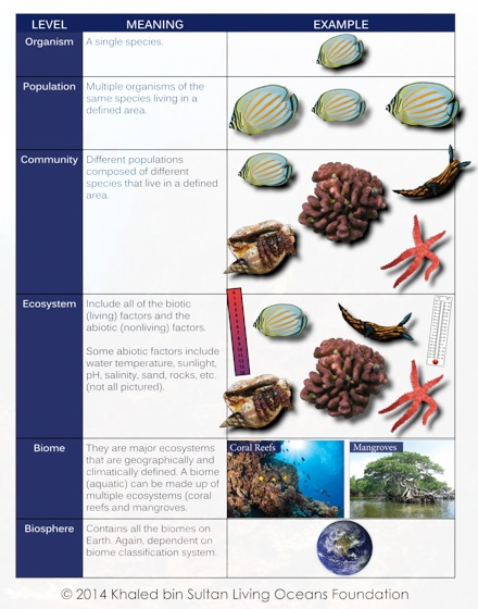 Kslof Coral Reef Education Portal Free Online Ecology Courseliving
