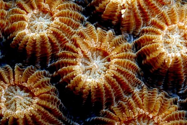 Kslof Coral Reef Education Portal Free Online Coral Anatomy