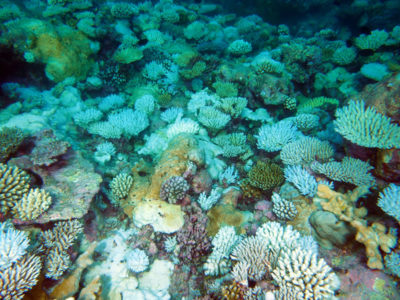 a bleached shallow reef in Salomon Atoll