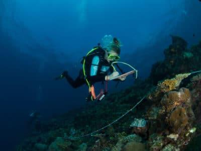Kristen Stolberg surveys a reef in the Solomon Islands