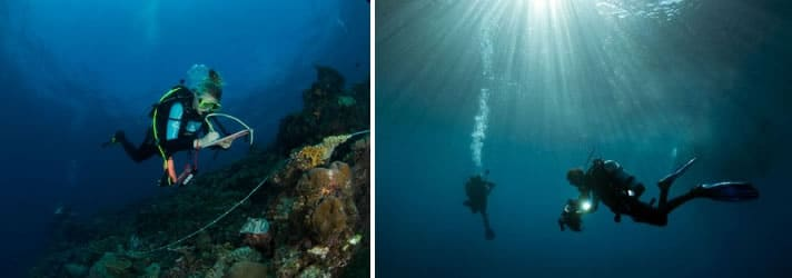 Science Divers on the Global Reef Expedition at Solomon Islands
