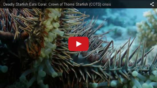 COTS video